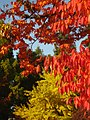 2011-10-28-141808 49,418805, 8,674650.JPG - panoramio.jpg