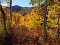 2013-10-15 13 31 44 Aspen and dogwood at Power House Picnic Site in Lamoille Canyon.JPG