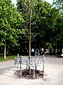 20130504 Maastricht Stadspark 01 Tree planted for inauguration of King Willem Alexander of the Netherlands.JPG
