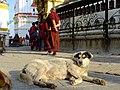 2015-03-08 Swayambhunath,Katmandu,Nepal,சுயம்புநாதர் கோயில்,スワヤンブナート DSCF4201.jpg