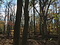 2015-11-15 09 37 47 Late autumn foliage in the woodlands along the West Branch Shabakunk Creek in Ewing, New Jersey.jpg