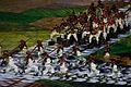 2016 Summer Olympics opening ceremony 1035283-olimpiadas abertura-1722.jpg