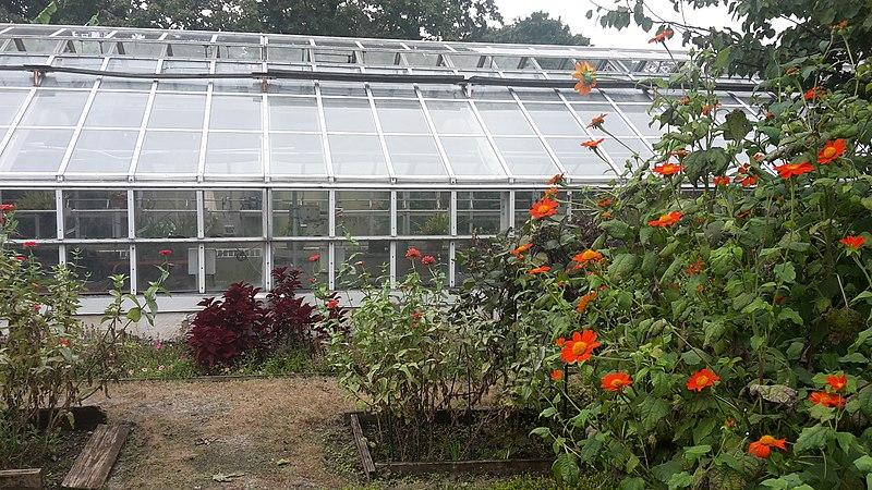 File:20171014-Snug Harbor Cultural Center and Botanical Garden - greenhouse.jpg