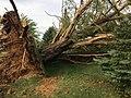 2020aug-derecho-damage-Shellsburg-IA.jpg