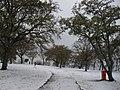 21 12 09 ulika sneeuw-Schnee-snow - panoramio - istra1977 (7).jpg