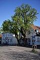 2 Rosskastanien in Wedel (2018-04-21 Naturdenkmal lfd. Nr. 07-14 im Kreis Pinneberg).jpg