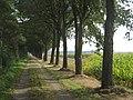 49847 Itterbeck, Germany - panoramio.jpg