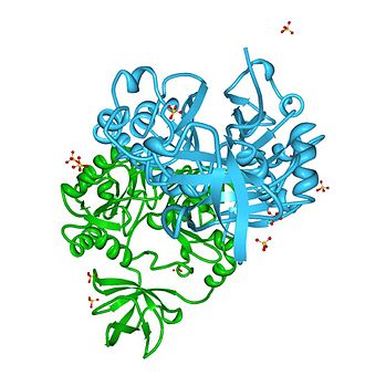Aminomethyltransferase - Image: AMT Aminomethiltransfera se