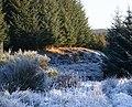 A Roe deer by Souters Stripe - geograph.org.uk - 1097752.jpg