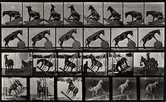 A circus horse. Photogravure after Eadweard Muybridge, 1887. Wellcome V0048758.jpg