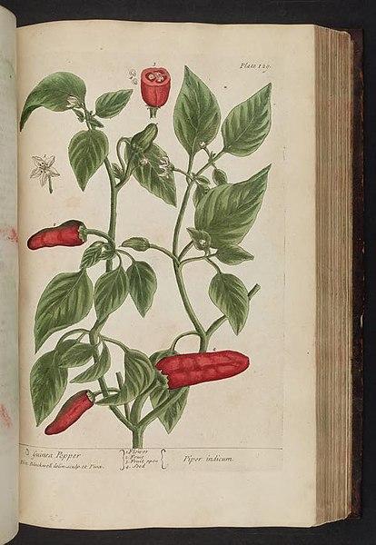 File:A curious herbal (Plate 129) BHL296443.jpg