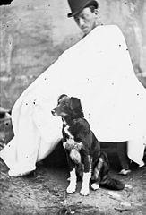 A dog (R Roberts)