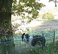 A friendly Collie - geograph.org.uk - 274996.jpg