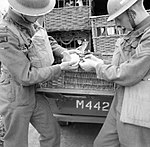 A message written on rice paper is put into a container and attached to a carrier pigeon by members of 61st Division Signals at Ballymena, Northern Ireland, 3 July 1941. H11281.jpg