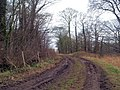 A muddy Watchley Lane on New Year's eve 2007 - geograph.org.uk - 644866.jpg