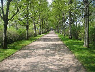 Hietaniemi Cemetery - Image: A road at Hietaniemi cemetery