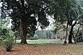 Acharya Jagadish Chandra Bose Indian Botanic Garden - Howrah 2011-02-20 1566.JPG