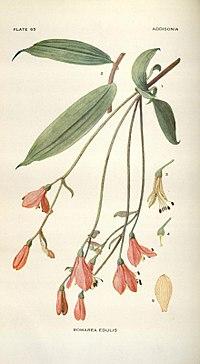 Addisonia (PLATE 065) (8576393143).jpg