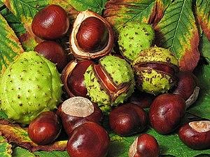 Aesculus hippocastanum fruit (jha).jpg