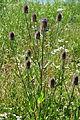Affoltern - Katzensee 2011-07-03 15-02-08.jpg