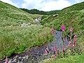 Afon Doethie Fawr, Ceredigion - geograph.org.uk - 514619.jpg