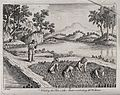 Agriculture; four labourers weeding rice paddies in China, w Wellcome V0025721.jpg
