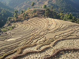 Geography of Nepal - Terraced farmland in Nepal.