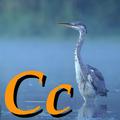 Alfabet zwierząt - literka C.png