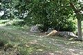 Alignement de menhirs de Pleslin-Trigavou 02.jpg