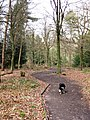 All Ability Trail, Wendover Woods - geograph.org.uk - 1192384.jpg