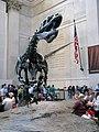 Allosaurus I (7231150350).jpg