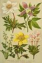 Alpen-Flora für Touristen und Pflanzenfreunde (1902) (17921646750).jpg