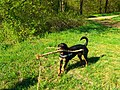 Alpha Tree - panoramio.jpg