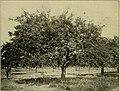 An apple orchard survey of Niagara County New York (1909) (19123042814).jpg
