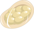 Ancylostoma duodenale egg (01).png