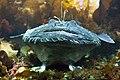 Angler fish.jpg
