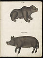 Animal drawings collected by Felix Platter, p2 - (75).jpg
