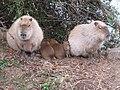 Animals in Parc de Thoiry 42.jpg