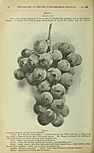 Annual report of the Fruit Growers' Association of Ontario, 1901 (1902) (19178077659).jpg