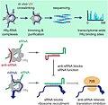 Anti-sRNA Discovery Methods and Mechanism.jpg