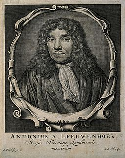 Antonius van Leeuwenhoek. Line engraving by A. de Blois afte Wellcome V0003468