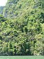 Ao Phang Nga National Park P1120306.JPG