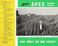 Apex Wheat.jpg
