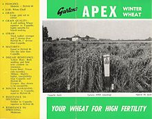Apex Wheat.jpg
