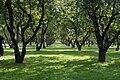 Apple garden in Kolomenskoye.jpg