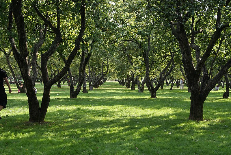 Parques perto de Moscou