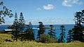 Araucaria heterophylla Endeavour Lodge Norfolk Island 2.jpg