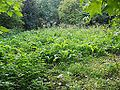 Arenbergpark-in-het-groen.jpg