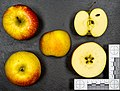 Ariwa (apple) jm95234.jpg