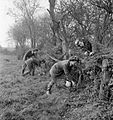 Arrest That Rat- the work of the Women's Land Army Rat Catchers, Sussex, 1942 D11256.jpg